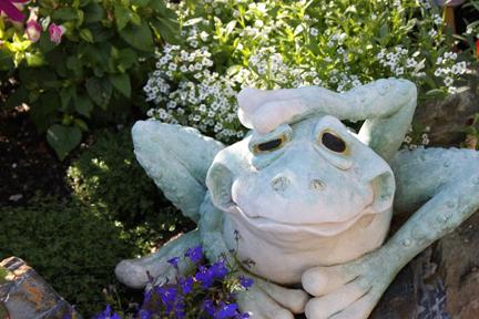 greenfrog-w