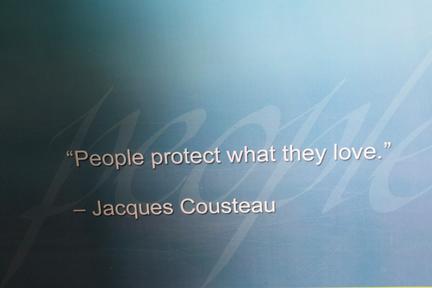 cousteau-w