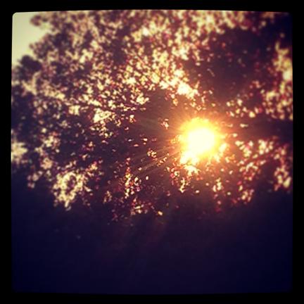 light-w