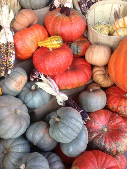 pumpkins2-w