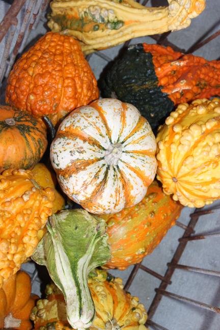 pumpkins3-w