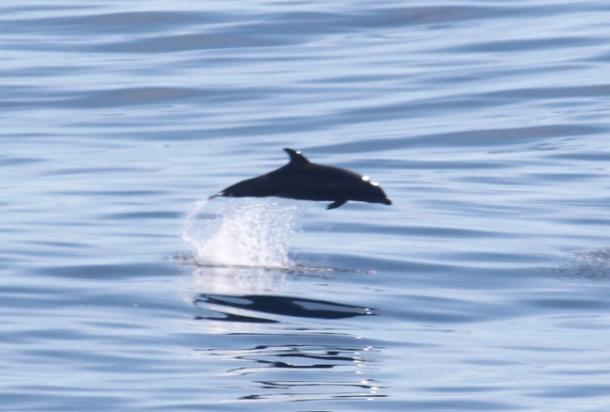 dolphinPCT2014-w