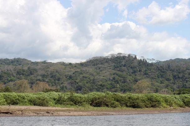 putanerasrainforest2014-w