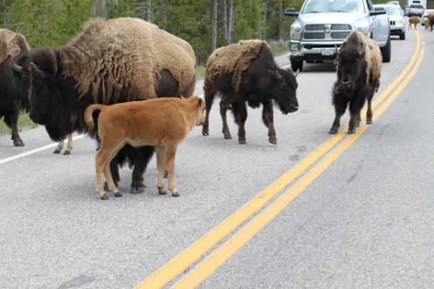 roadbuffs2012-w