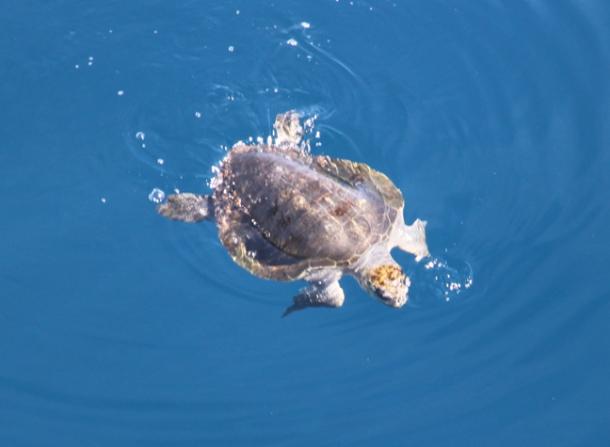 turtlePCT2014-w