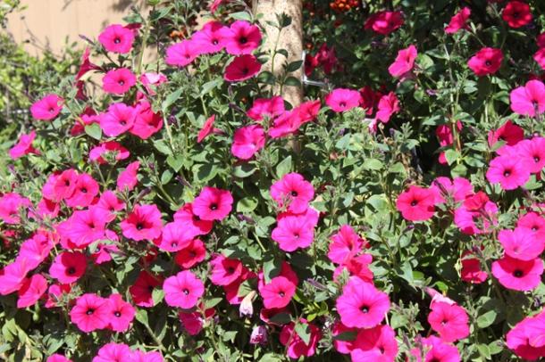spring14-4-w