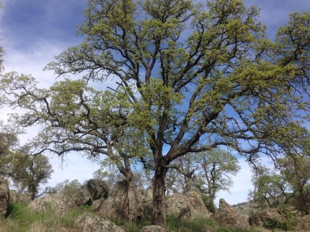 treespring-w