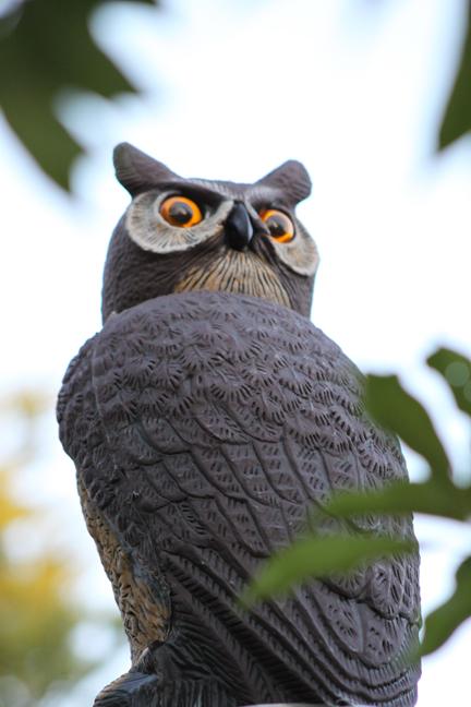 owl-w
