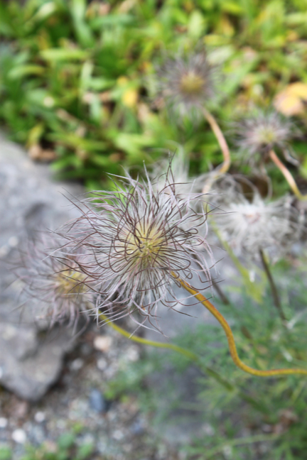 botanicalgarden5-w