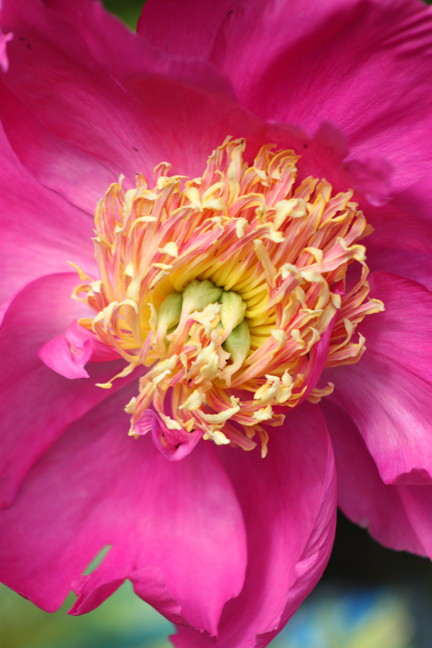 botanicalgarden7-w