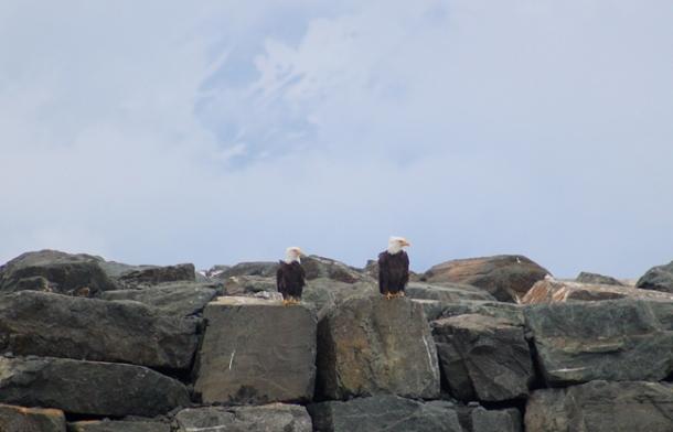 eagles-w