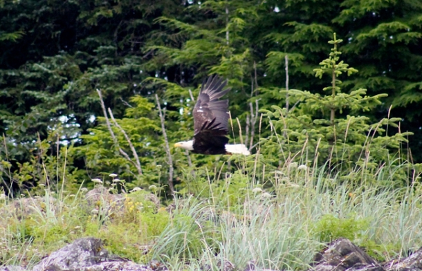 eagles2-w