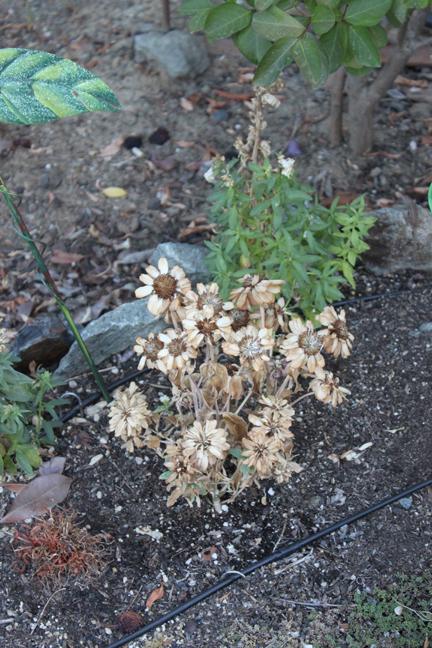 deadflowers-w