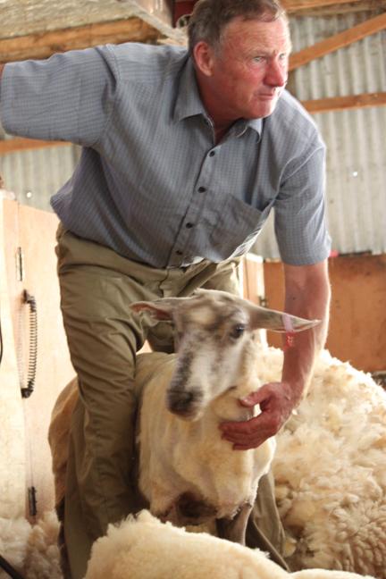 sheepstation4-w