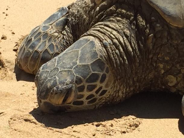 turtle1-w