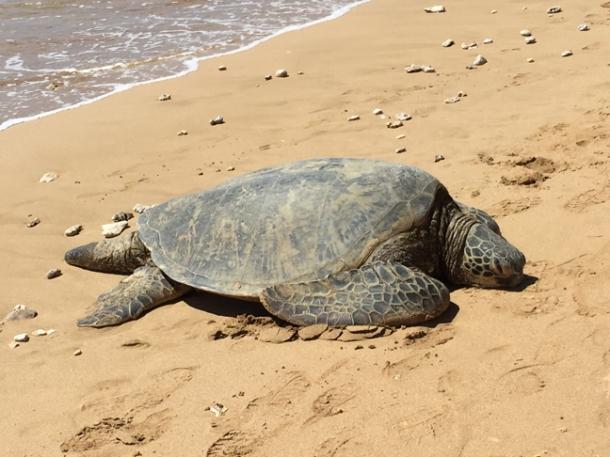 turtle3-w