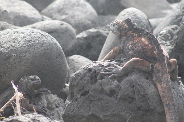 tortoises1-w