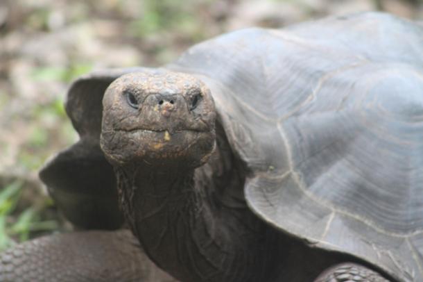 tortoises10-w