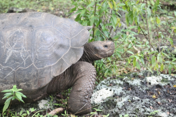 tortoises11-w