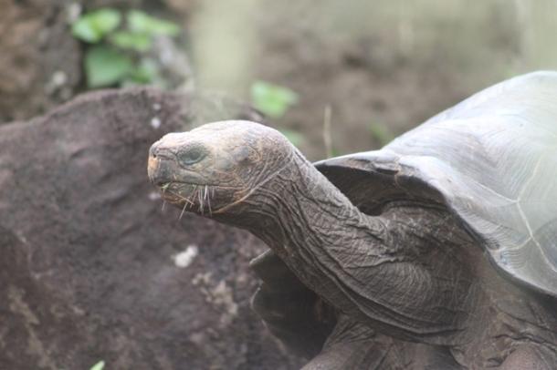 tortoises9-w