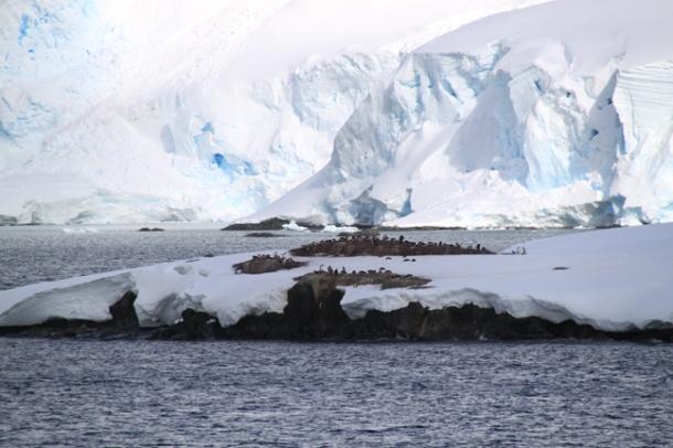 antarctica5-w