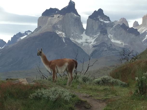 patagonia6-w