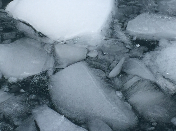 antarcticatattered14-w