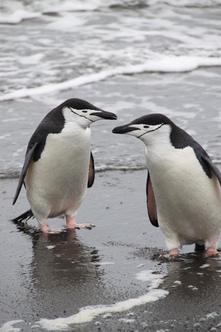 antarcticatattered15-w