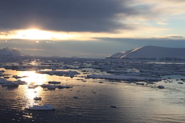 antarcticatattered17-w