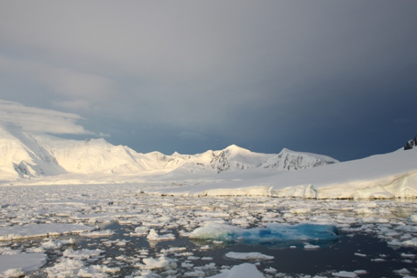 antarcticatattered20-w
