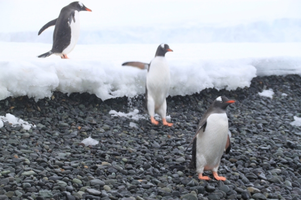 antarcticatattered9-w