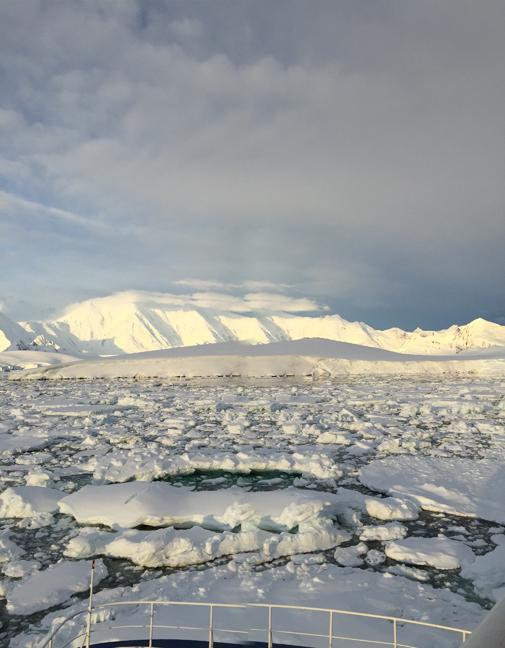 antarctictattered1-w